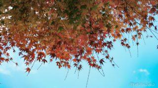 秋になって冬になって 12/01